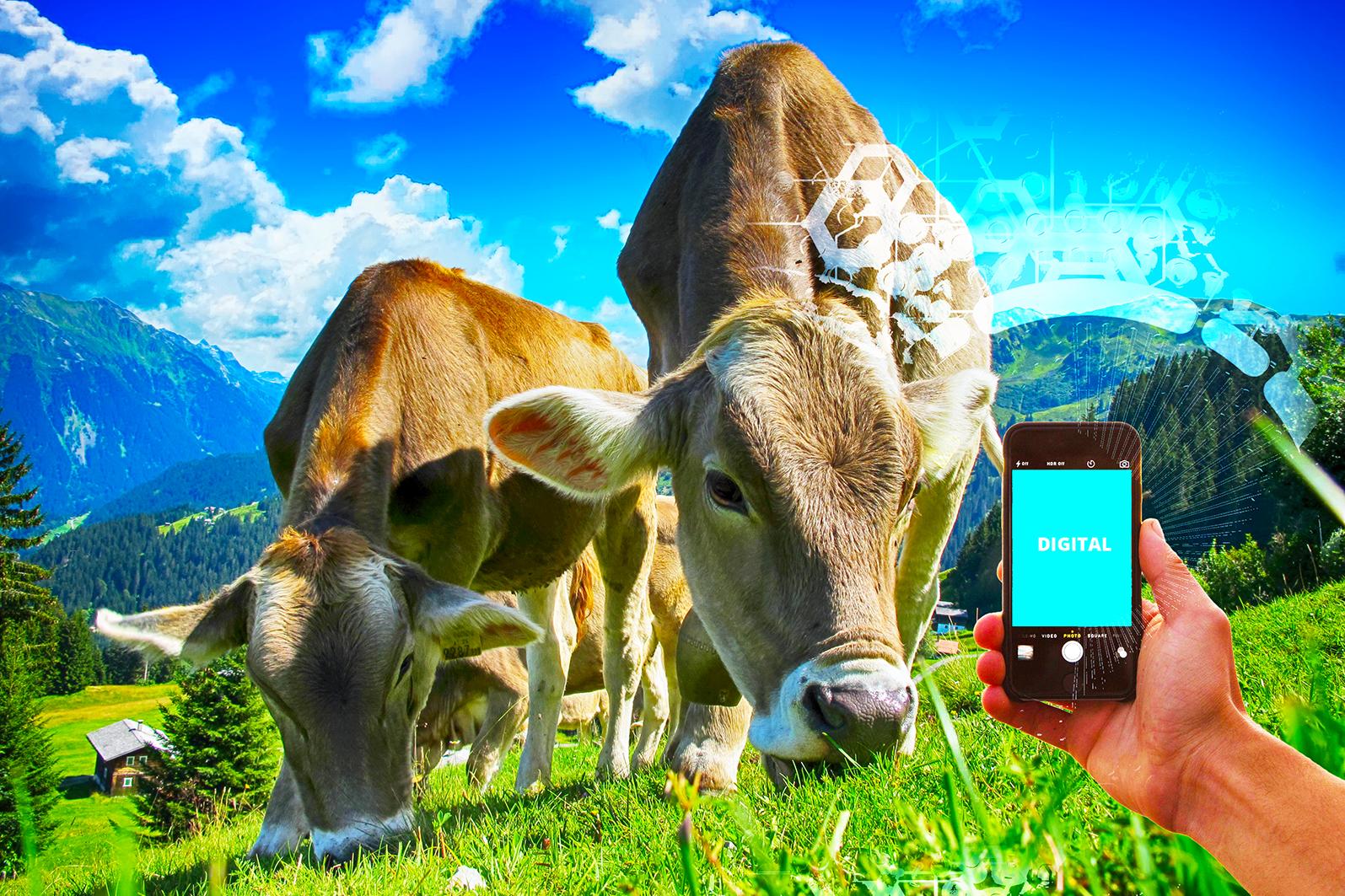Online-Seminar Innos Digitalisierung Landwirtschaft Kuehe Landwirt Bauer Bild von pixabay-blog